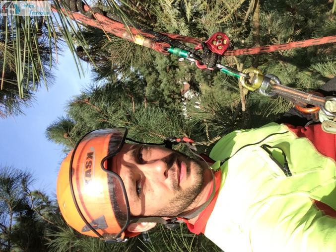 Logo de GEORGES ARBORISTE GRIMPEUR  - ELAGAGE ESPACE VERT, société de travaux en Abatage d'arbres