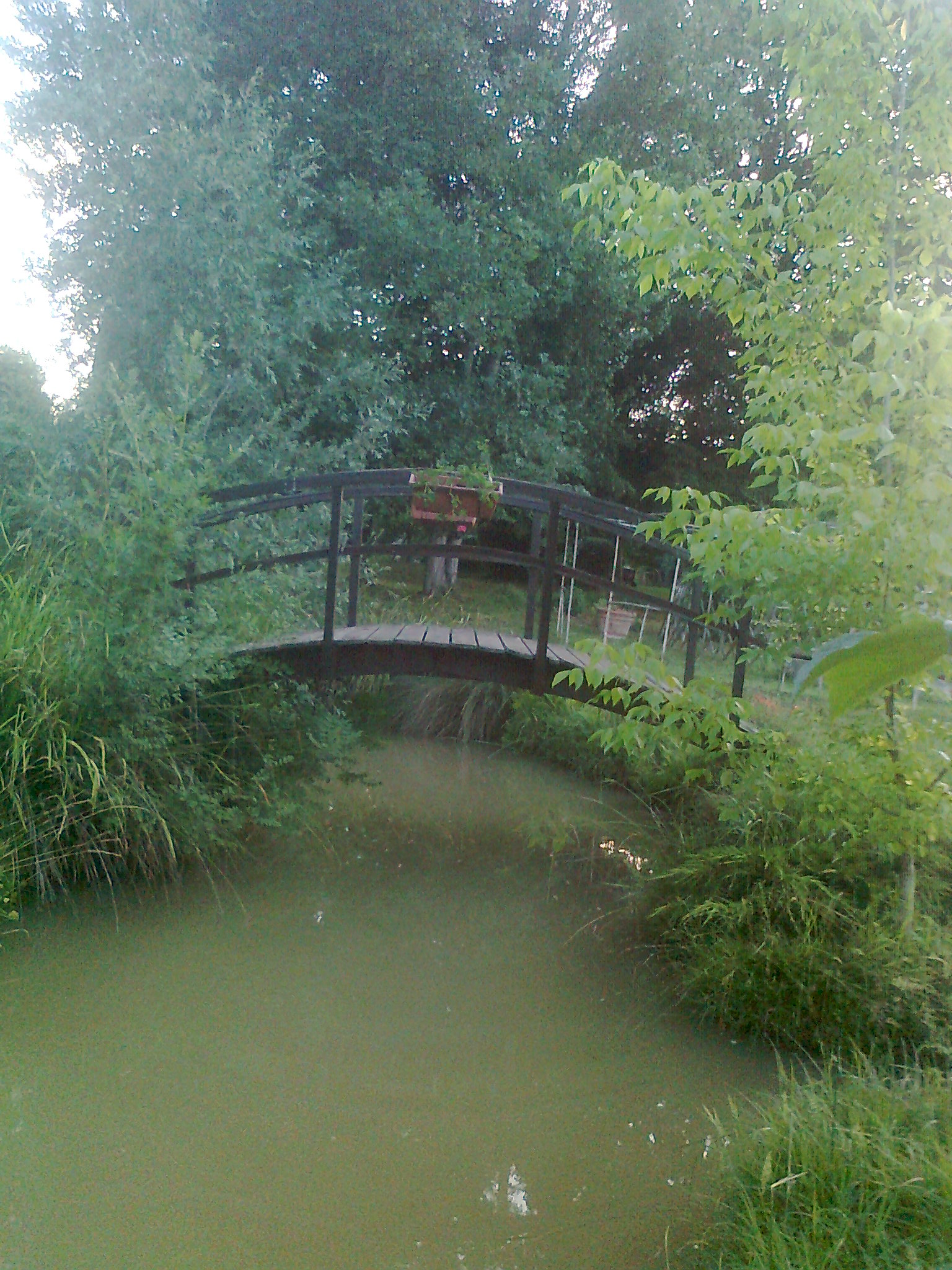 verts tiges, artisan spécialisé en Elagage / Taille
