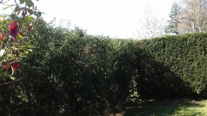 Multickael, artisan spécialisé en Entretien de jardin (ponctuel ou à l'année)